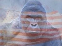 "Clemson Housing Bans ""Harambe references"" Citing Rape Culture, Racism"